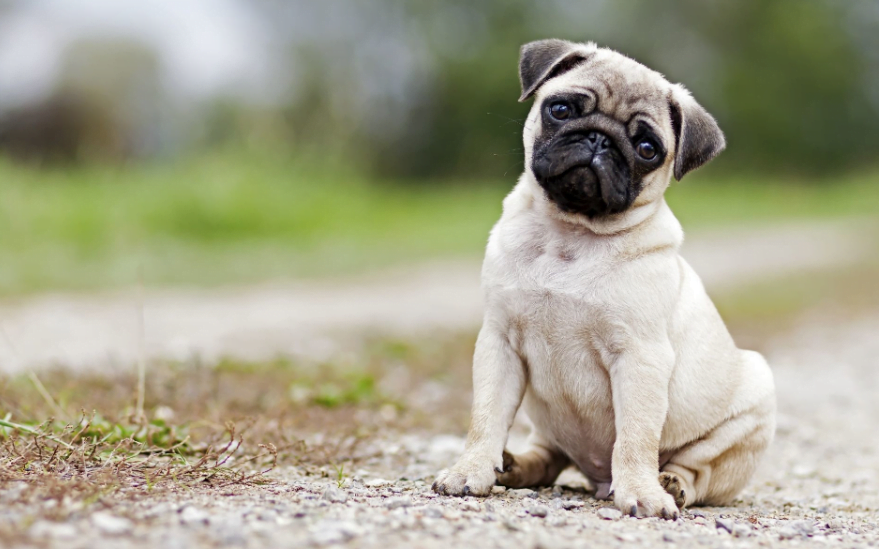 3-day Potty Training for Puppies